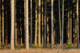 GYT_4757 Trees